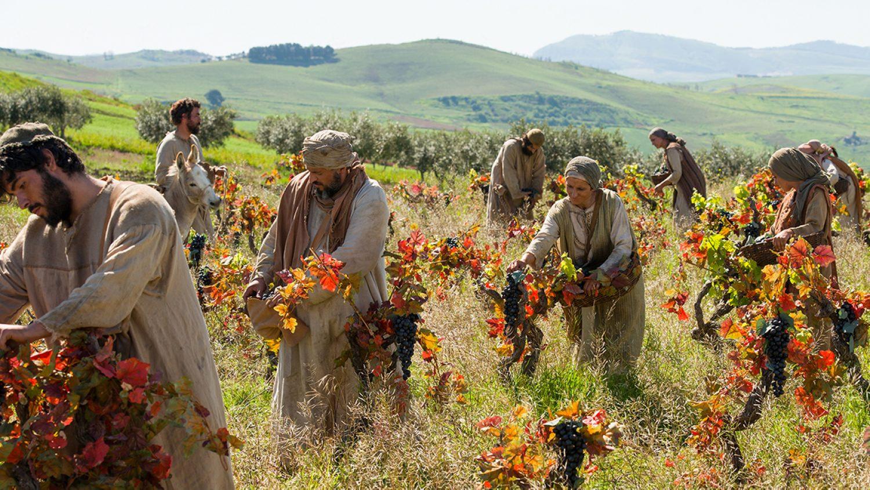 labourers-in-the-vineyard-1300x685